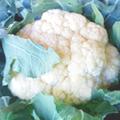 小金井野菜-カリフラワー
