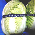 小金井野菜-白菜