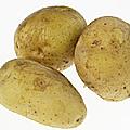 小金井野菜-ジャガイモ