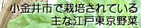 江戸東京野菜と小金井市