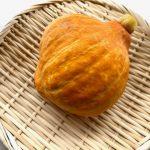 コリンキー|小金井で採れる野菜